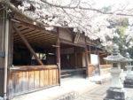 招魂社 社殿と桜