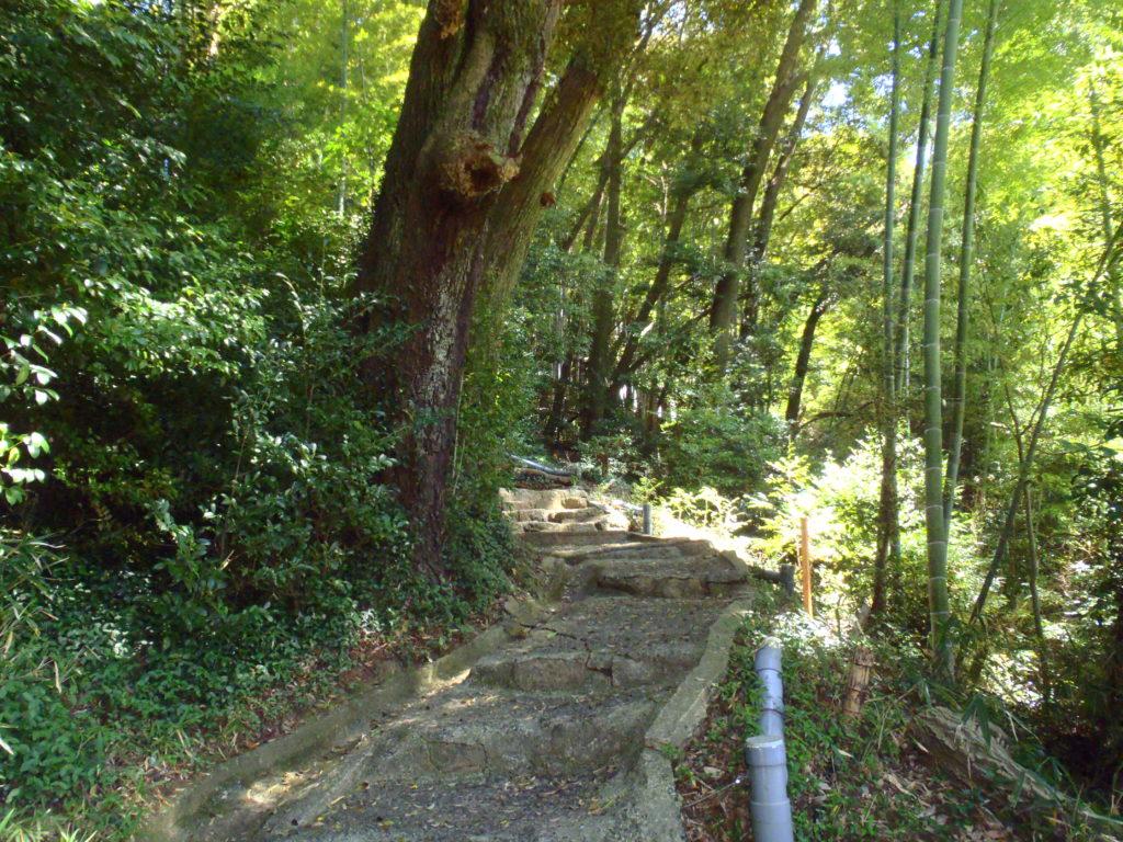 真亀山神社 裏参道