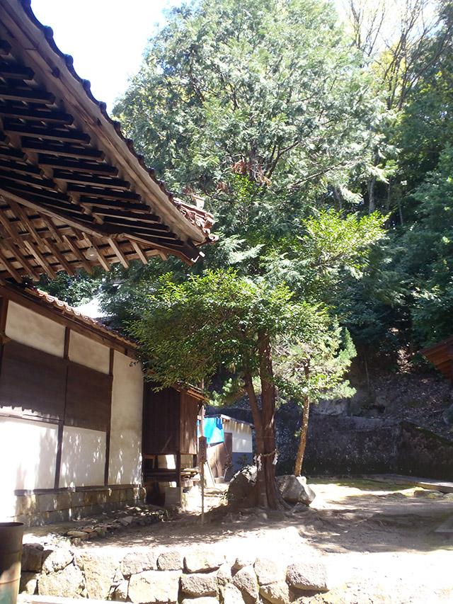 真亀山神社 縁結びの木