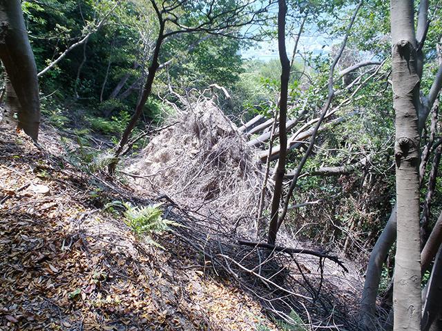登山道途中の倒木