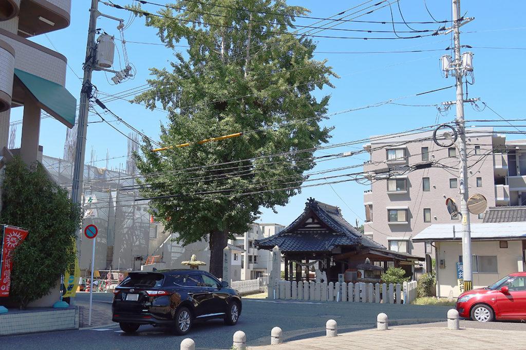 神社とイチョウの木 全景