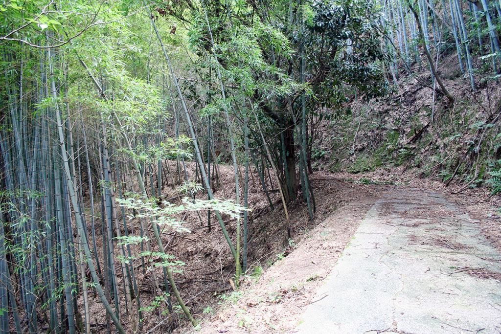 記念公園からアメニティ公園への遊歩道