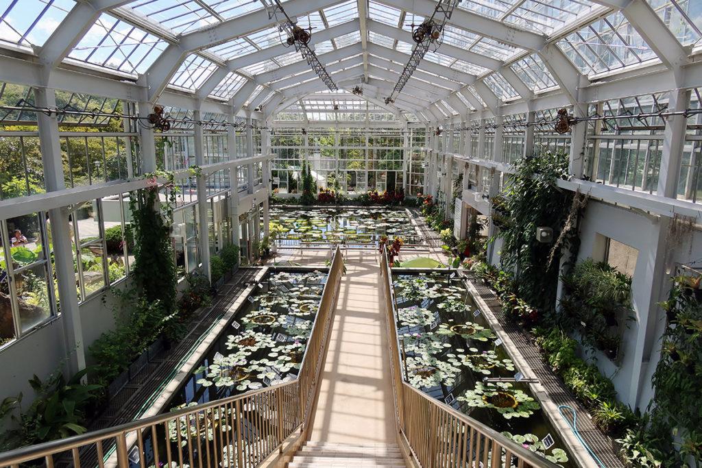 熱帯スイレン温室