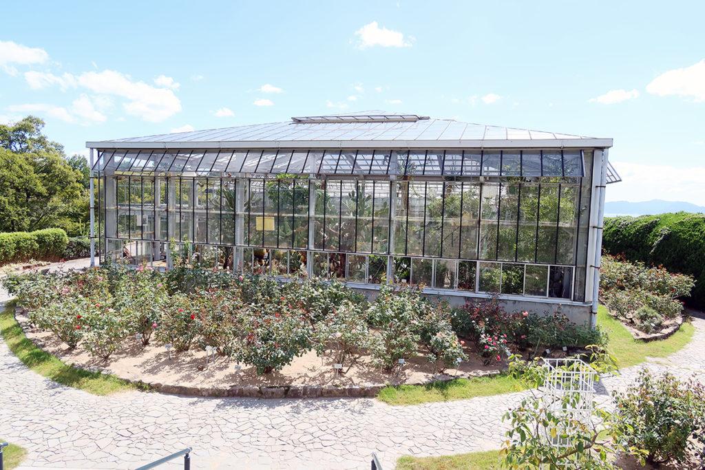 サボテン温室